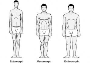 Типы мужского тела
